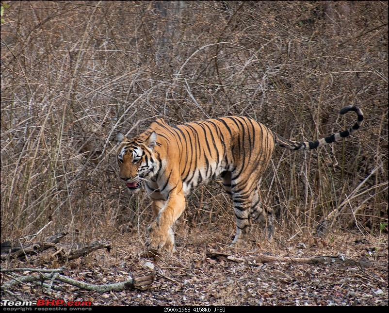 Cars, Wildlife and Photography Lessons at Kabini-dsc_1919.jpg