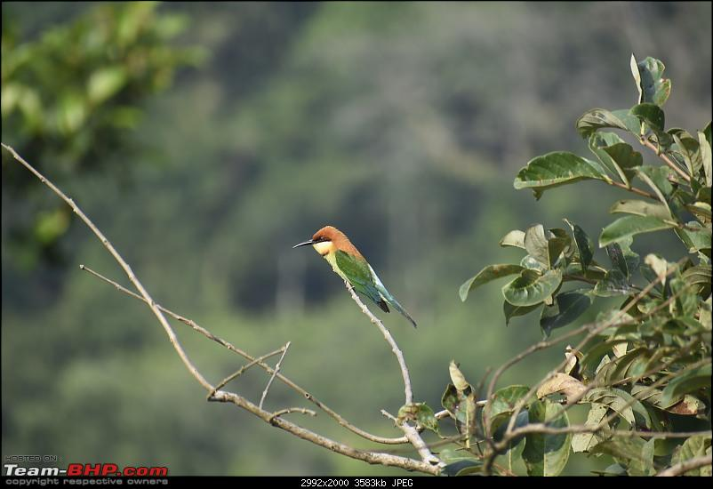 Quick weekend getaway to the Western Ghats-12-forest-walk-10.jpg