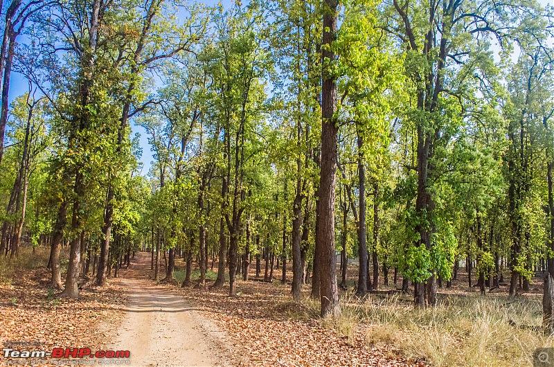 Road Trip to the Indian Savanna-_dsc1400.jpg