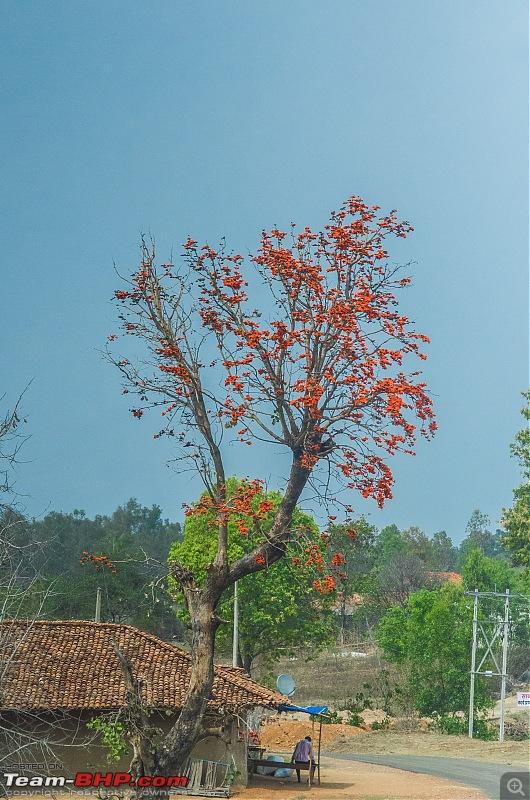 Road Trip to the Indian Savanna-_dsc1520.jpg