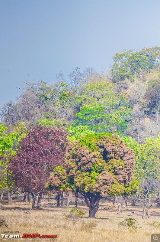 Road Trip to the Indian Savanna-_dsc1623.jpg