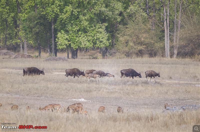 Road Trip to the Indian Savanna-_dsc1624.jpg