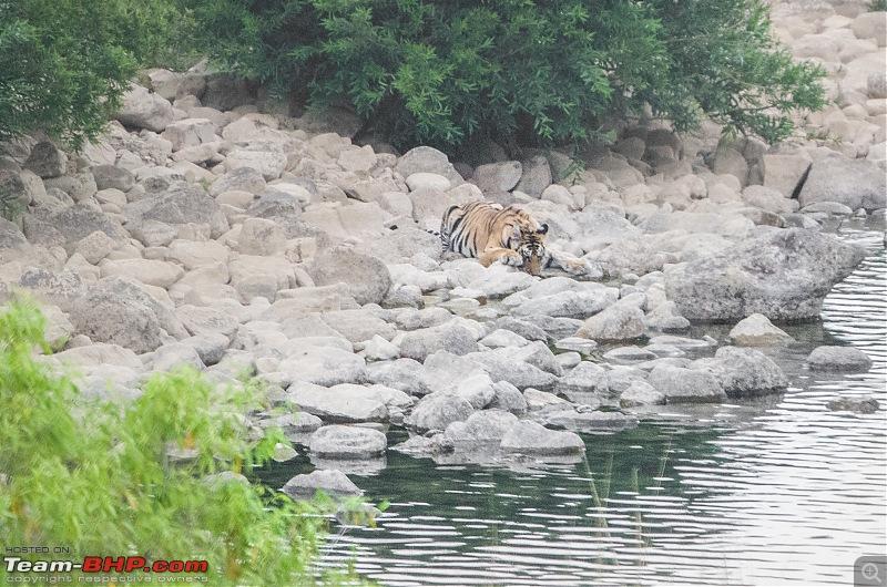 Road Trip to the Indian Savanna-_dsc1724.jpg