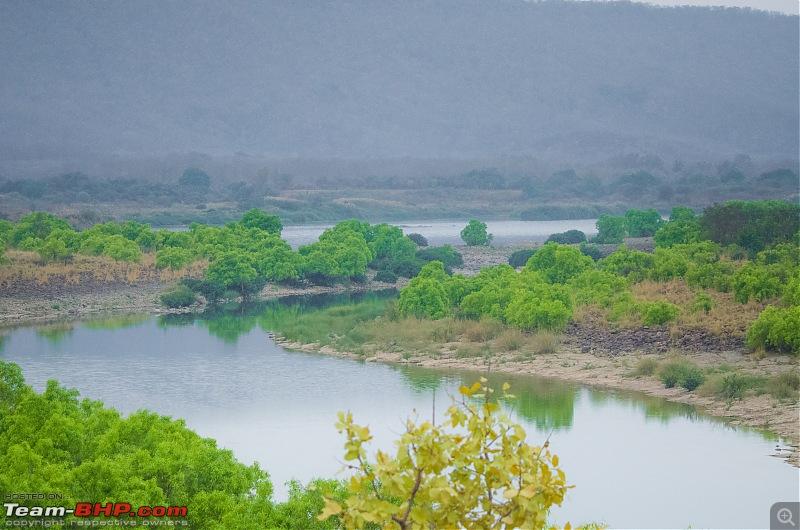Road Trip to the Indian Savanna-_dsc1727.jpg