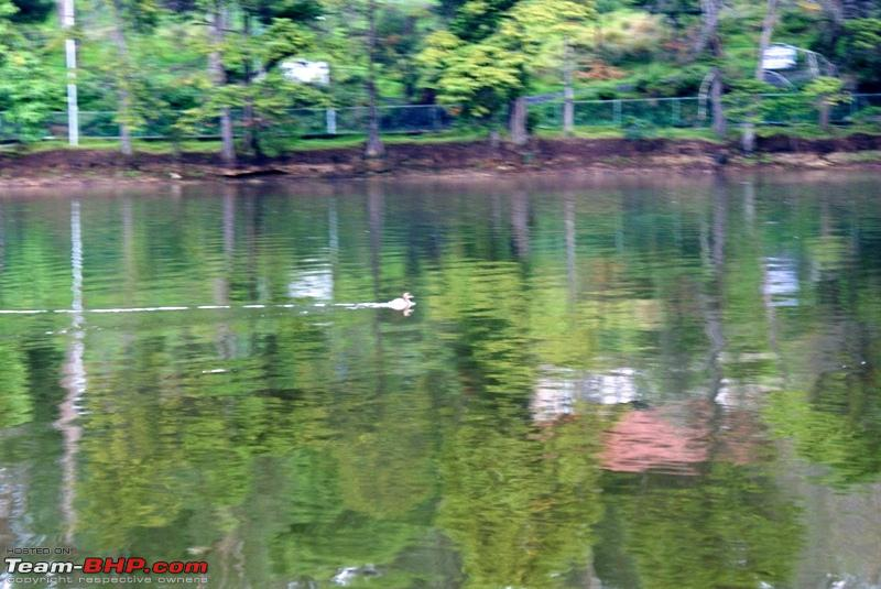 Name:  a Kodai Lake_a duckling.JPG