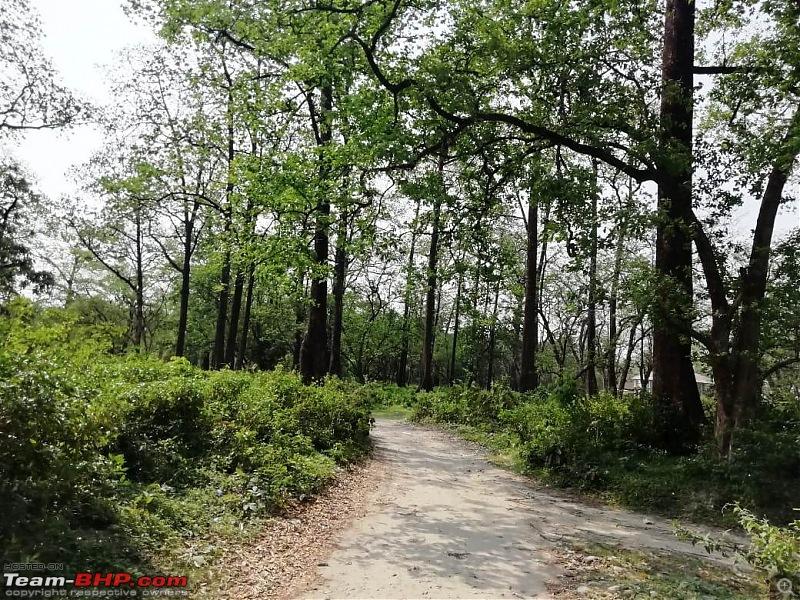 To Manas National Park in a little city hatch!-mathanguri-woods.jpeg