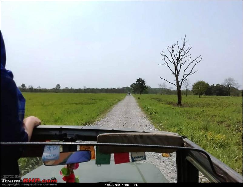 To Manas National Park in a little city hatch!-safari2.jpeg