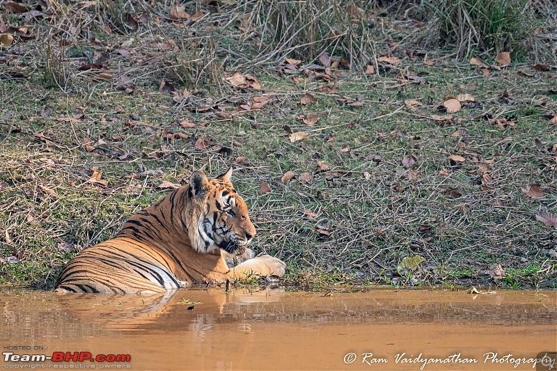 Wildlife at enchanting Kanha | A photologue-dsc_12102.jpg