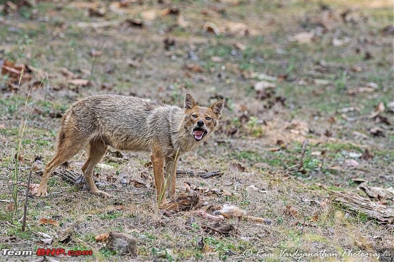 Wildlife at enchanting Kanha | A photologue-dsc_13622.jpg