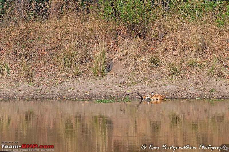 Wildlife at enchanting Kanha | A photologue-dsc_14372.jpg