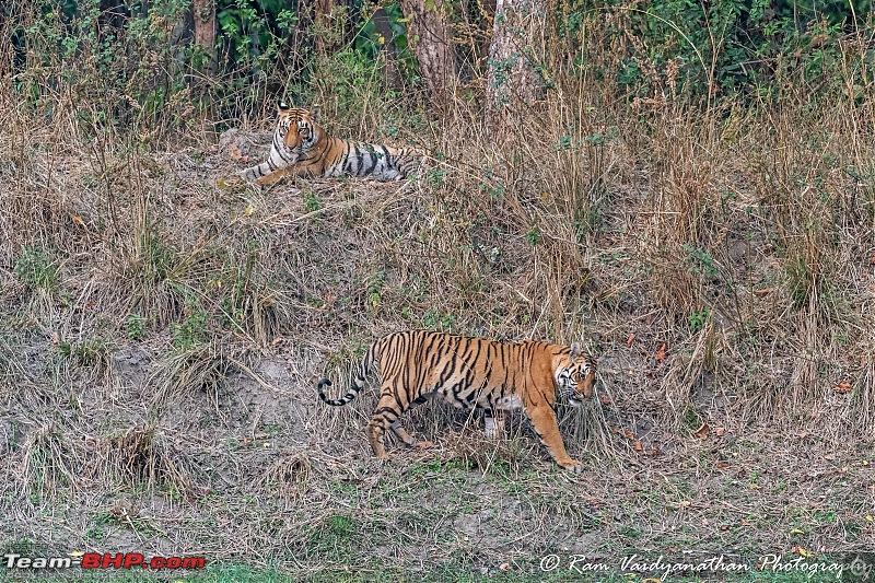 Wildlife at enchanting Kanha   A photologue-dsc_16892.jpg