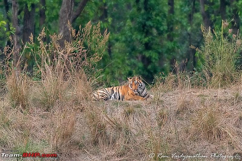Wildlife at enchanting Kanha   A photologue-dsc_17582.jpg