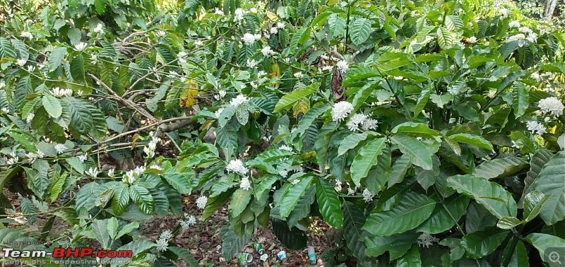 Kalasa - In search of the panchatheerthas-coffee.jpeg