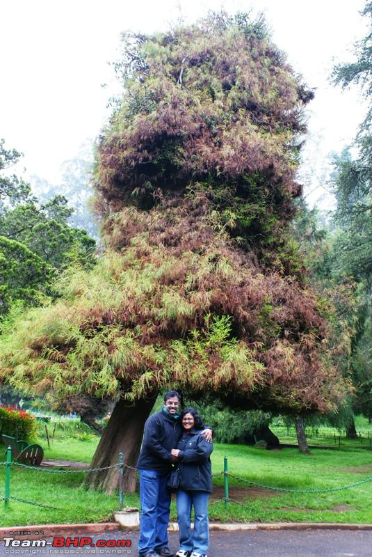 Name:  a Ooty Botanical Garden_beautiful tree.JPG