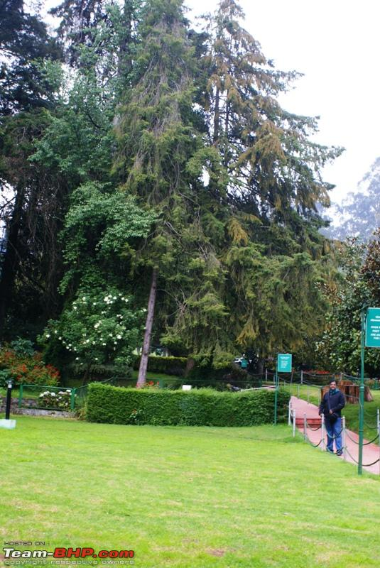 Name:  a Ooty Botanical Garden_nice trees.JPG