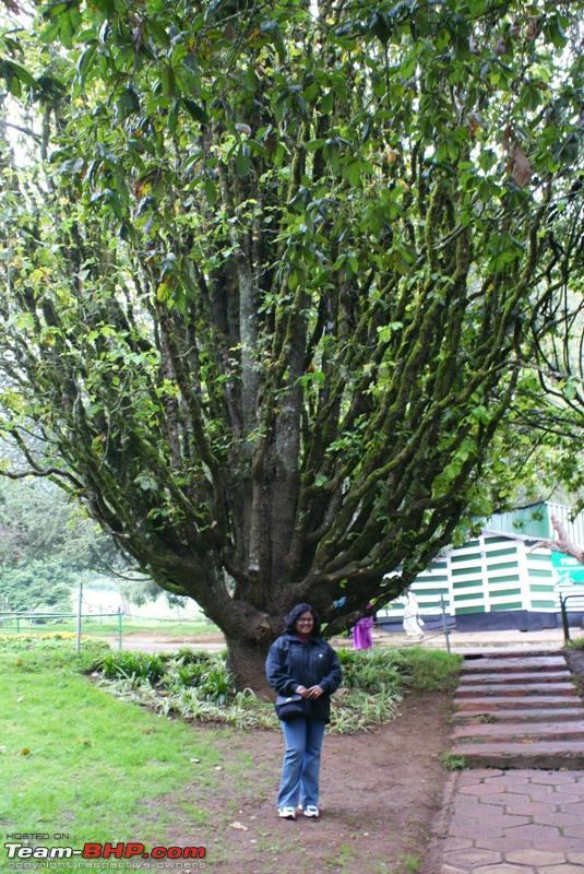 Name:  a Ooty Botanical Garden_peculiar tree.JPG