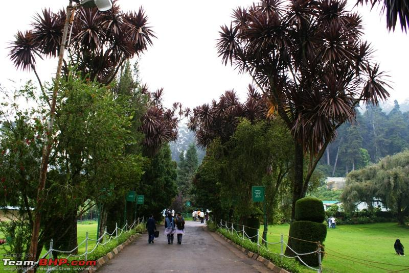 Name:  a Ooty Botanical Garden_way to green house.JPG