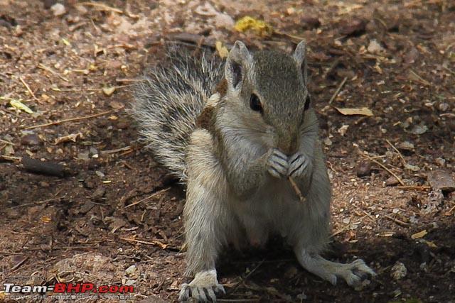 Name:  squirrel.jpg Views: 2600 Size:  118.3 KB