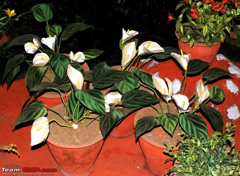 Name:  c Thread Garden_beautiful flowers_anthorium.JPG Views: 3378 Size:  323.1 KB