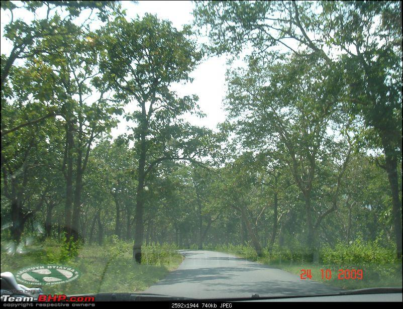 One Full Tank on my Black Beauty: Bangalore - Guruvayur -Bangalore: Verna CRDI SX-driving_thru_forest1.jpg