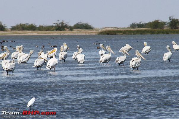 Name:  chilling_pelican.jpg Views: 1699 Size:  97.3 KB