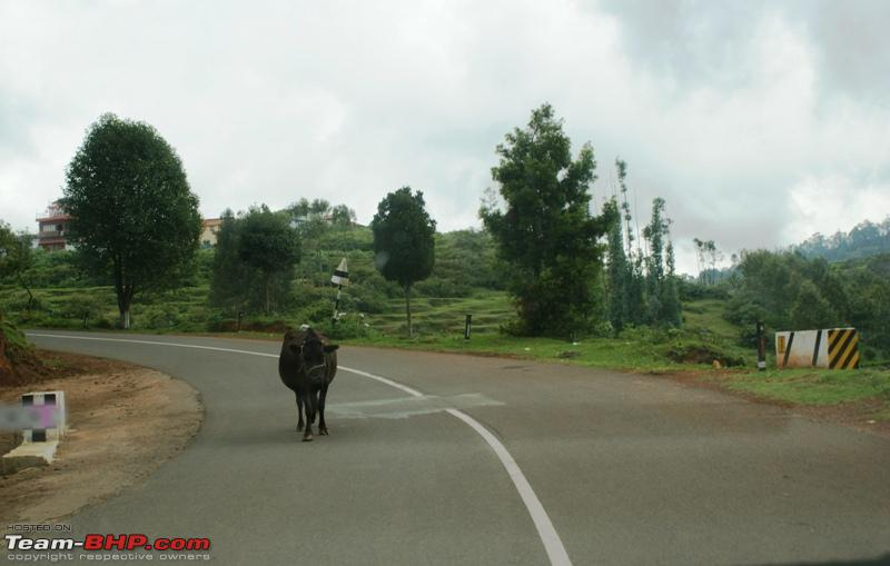 Name:  z Highway to Coonoor_wrong entrant.JPG