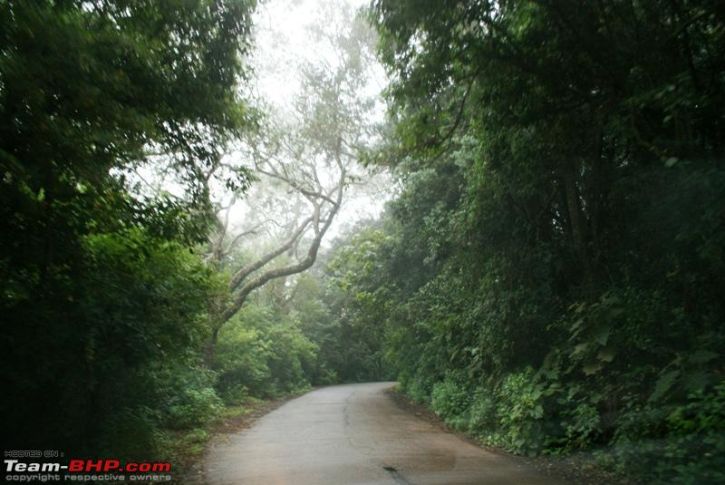 Name:  s Way back to Coonoor_trail thru Jungle.JPG