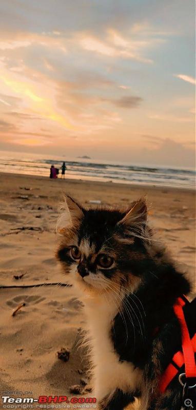 Five Friends on four wheels - A coastal road trip-snapchat1813261132.jpg