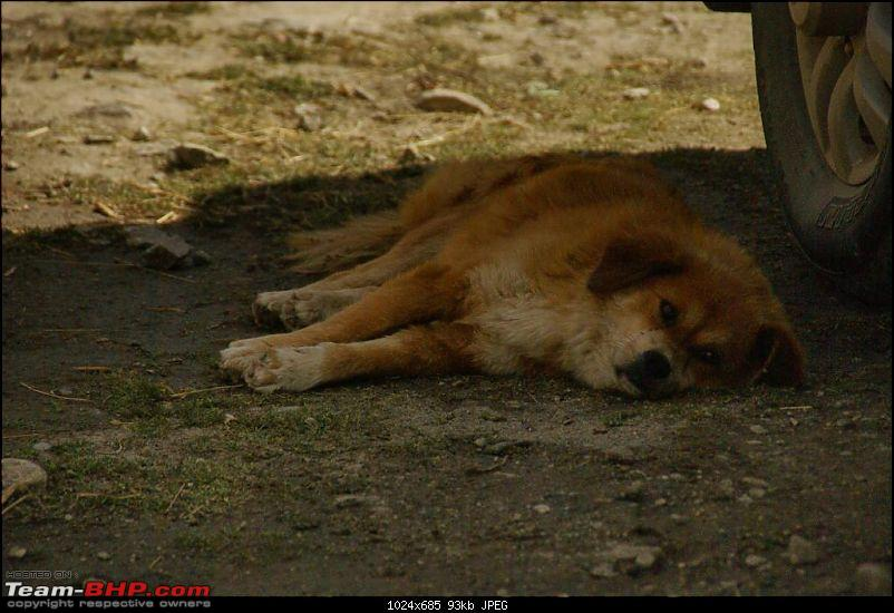 The Himachal Tribal Circuit - 2009-r_16-dog-falls.jpg