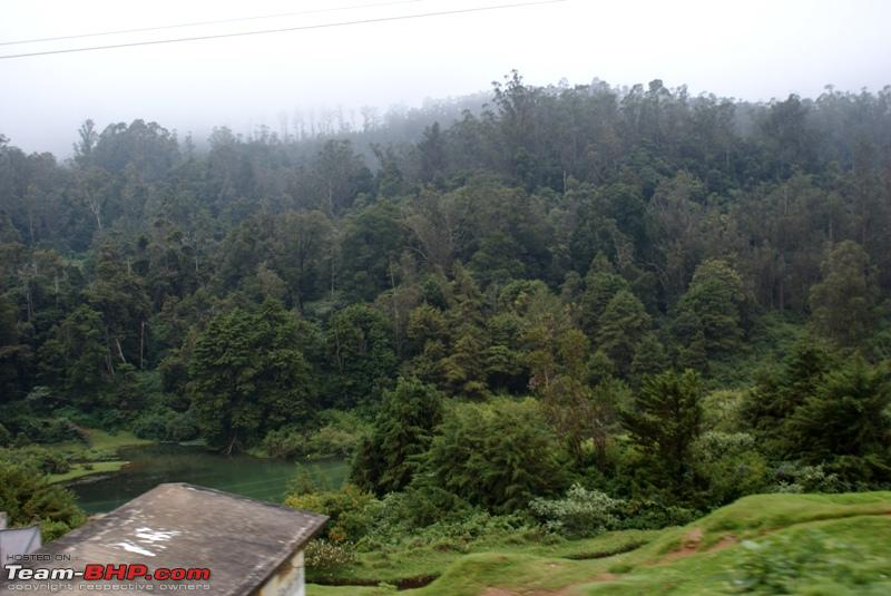 Name:  p dense forest.JPG