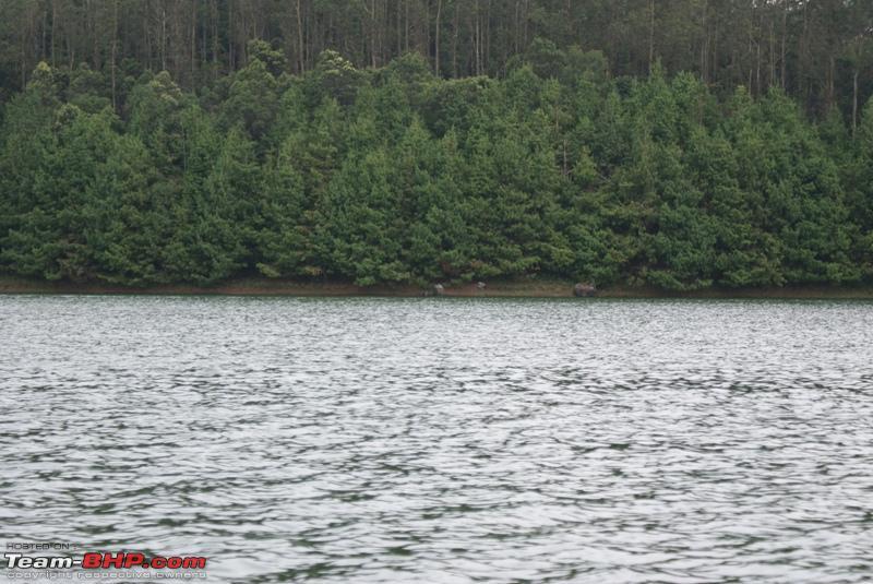 Name:  z2 Lake shore_some animals drinking water.JPG Views: 1579 Size:  253.3 KB