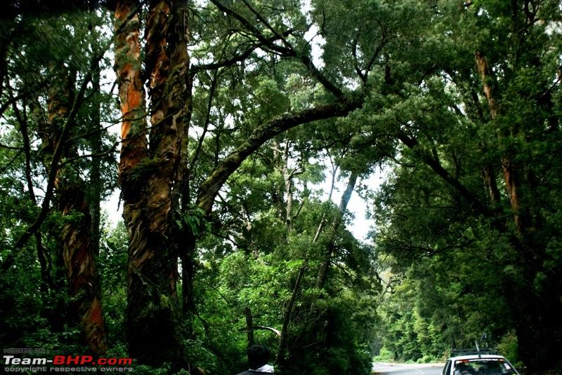 Name:  a Road to Ooty_through dense forest.JPG Views: 2119 Size:  332.3 KB