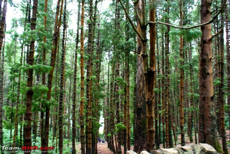 Name:  g Pine Forest.JPG Views: 5673 Size:  336.6 KB