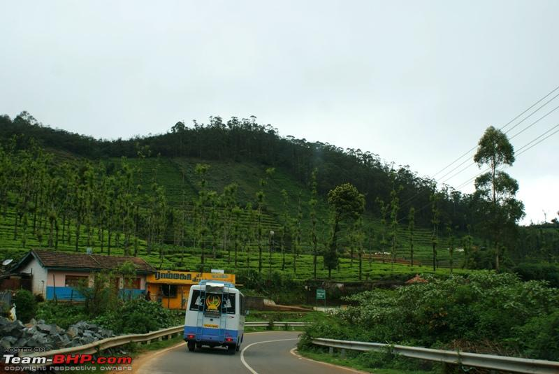 Name:  p Mysore Highway_beautiful tea plantation.JPG