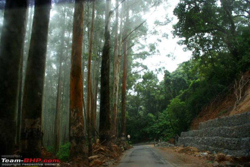 Name:  zzzz Mysore Highway_road work_eucalyptus forest.JPG