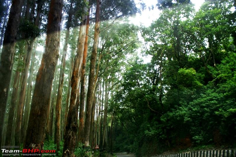 Name:  a Forest enroute.JPG
