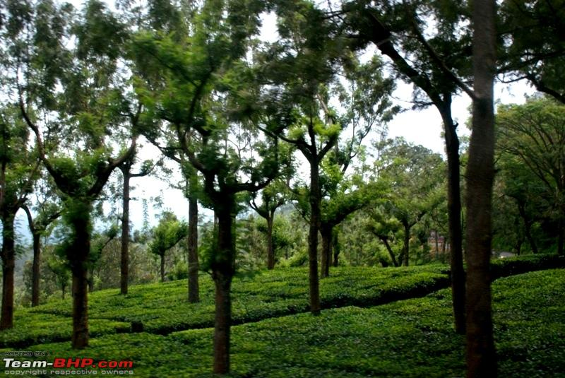 Name:  k Beautiful tea estate.JPG