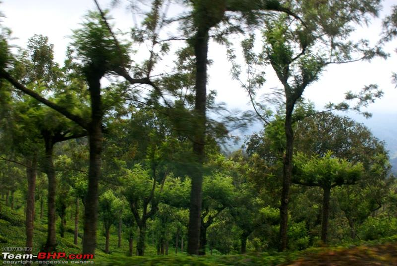 Name:  l Tea estate.JPG