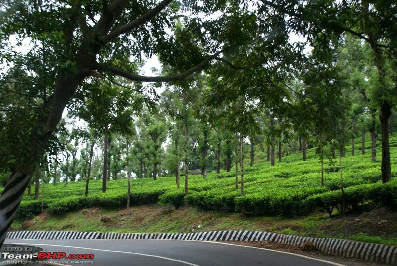 Name:  m Beautiful tea estate and road.JPG