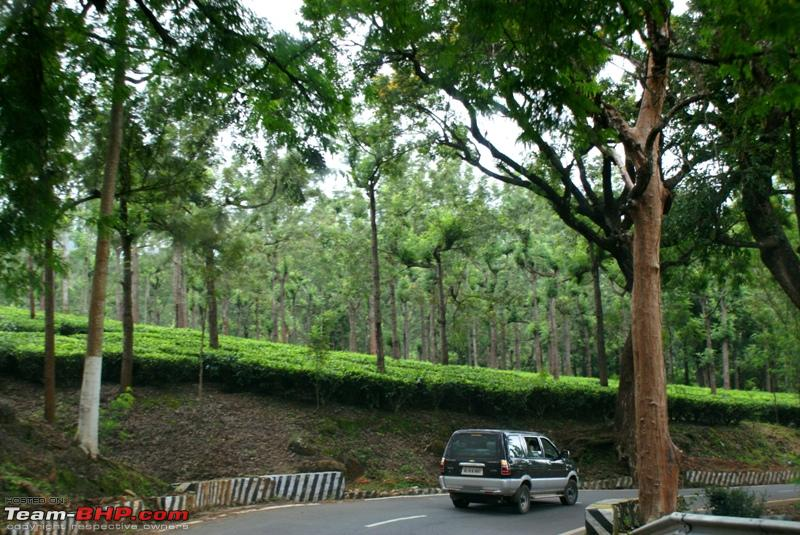 Name:  o Tea estate.JPG