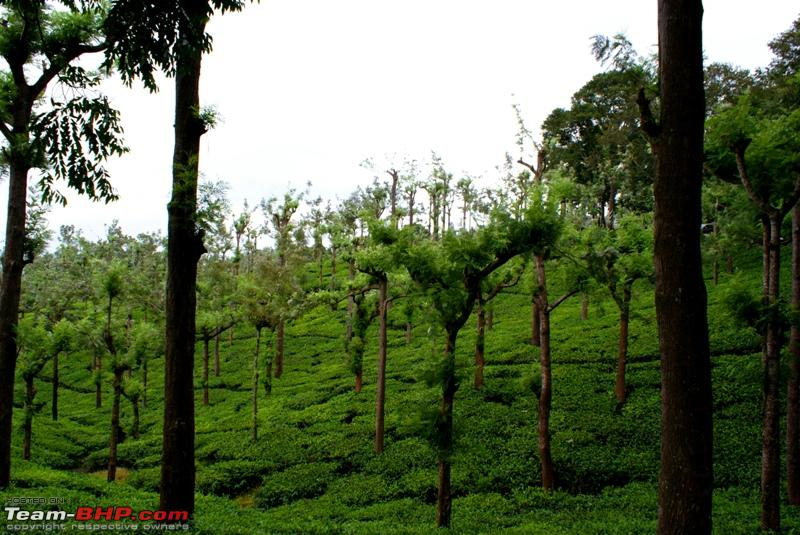 Name:  e Tea estate.JPG