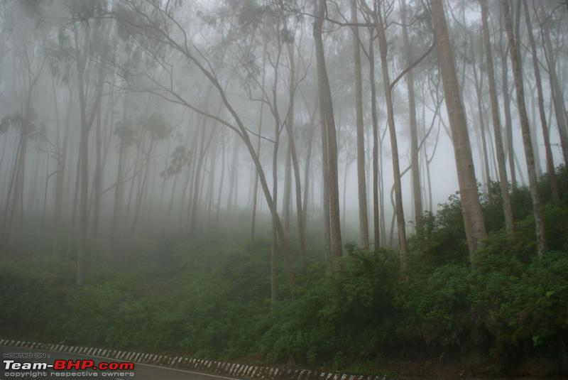 Name:  o Forest covered by fog Scary.JPG