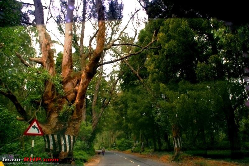 Name:  f Highway to Mysore_beautiful trees.JPG