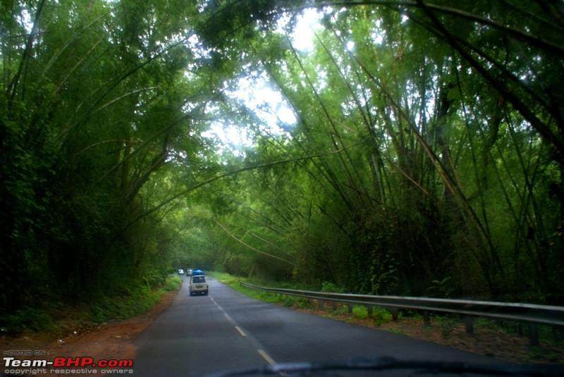 Name:  d Bamboo Forest_Mudumalai.JPG