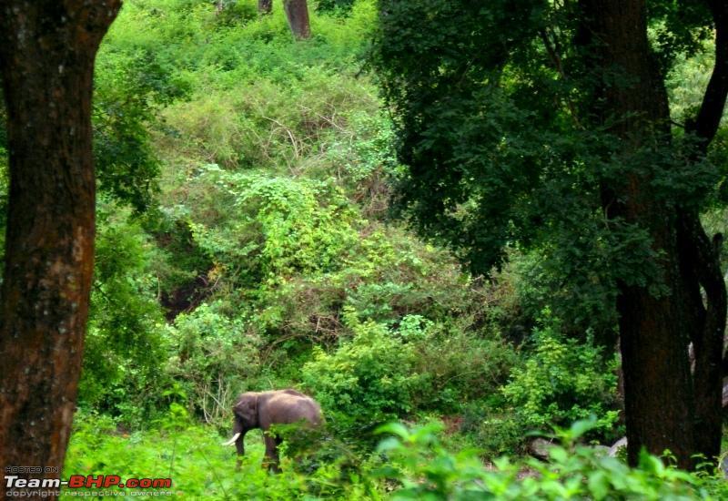 Name:  n Tusker.JPG Views: 1587 Size:  317.3 KB