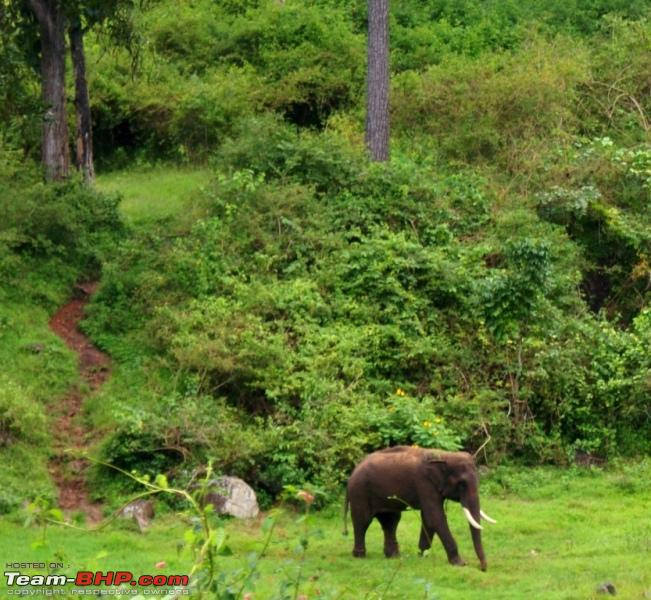 Name:  s Tusker_changed his mind and heading back to the creek.JPG