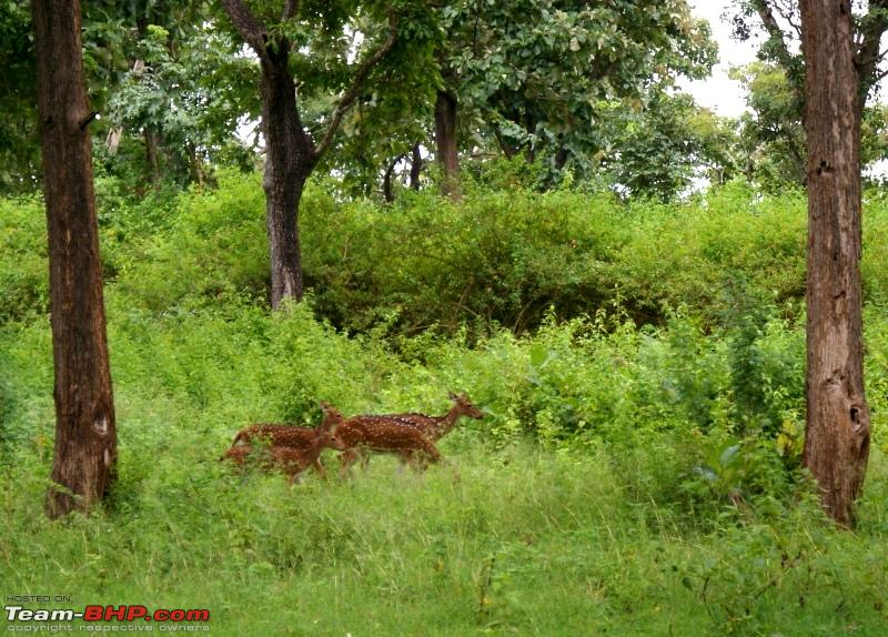 Name:  x Some spotted deer.JPG