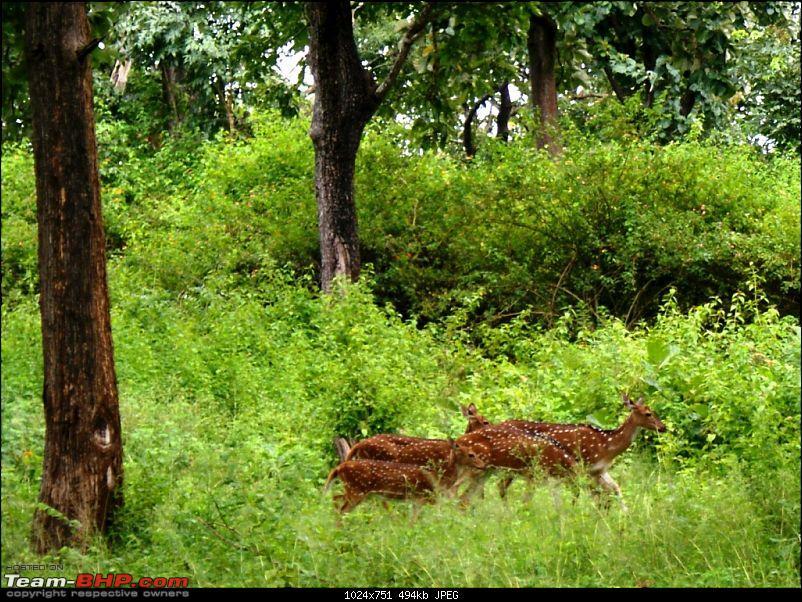 An incredible road trip to Velankanni, Kodaikanal and Ooty-y-deer.jpg