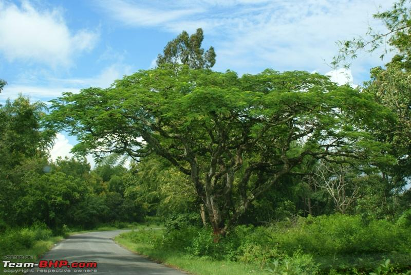 Name:  r Beautiful tree_Bandipur Forest.JPG