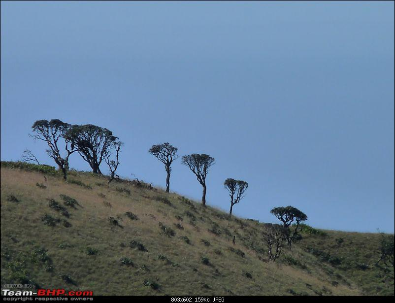 'Xing'ing around ! - A weekend trek to Mukurthi Peak near Ooty...-091.jpg